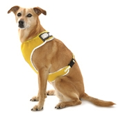 Flashing Dog Harness