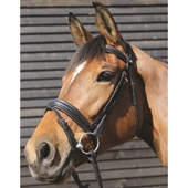 Padded Flash Bridle