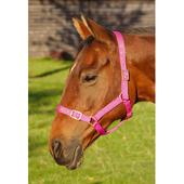 Orion Headcollar