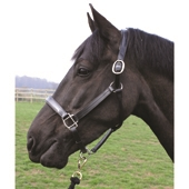 Patent Leather Headcollar